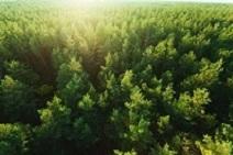 光がふりそそぐ森の画像